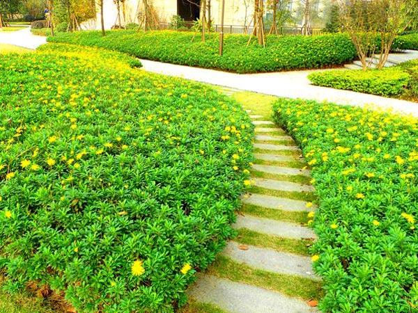 小区绿化有没有统一的标准